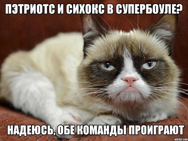 Grumpy Cat superbowl meme